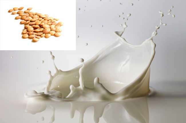 मसूर की दाल और दूध