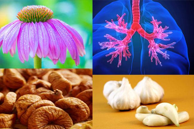श्वसन संक्रमण और फेफड़ों के लिए हर्ब्स
