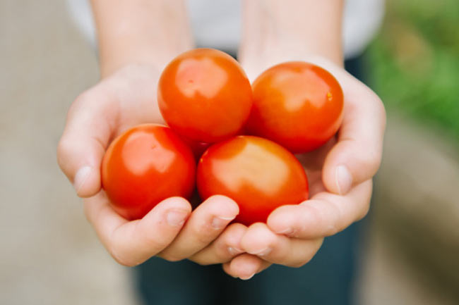 Tomatoes for sun protection
