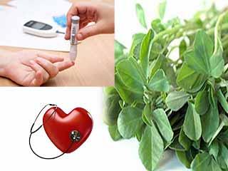 जानें सेहत के लिए कितनी फायदेमंद है हरी मेथी