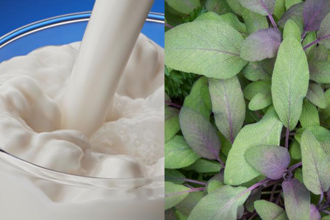 दूध में तुलसी के पत्ते मिलाकर पीने के फायदे
