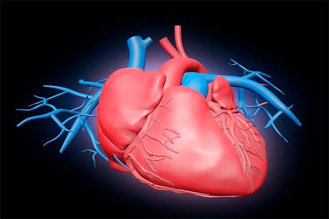 हृदय सम्बंधी बीमारी में कमी