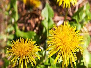 कैंसर से लड़ने में मददगार हैं ये जादुई फूल
