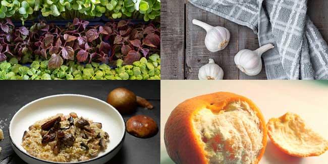 Image result for बॉडी की इम्युनिटी पावर बढ़ाने के लिए करे इन आहार का सेवन