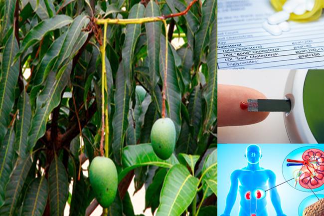 आम की पत्तियां के स्वास्थ्य लाभ