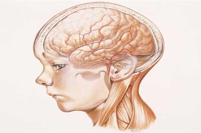 दिमाग पर बुरा असर
