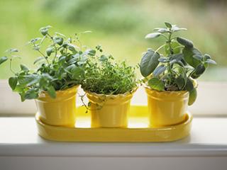इन 5 पौधों को लगाएं, अपने घर की हवा को जीवनदायी बनाएं!