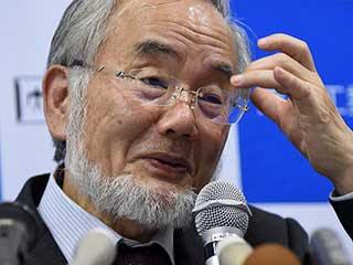 Japanese researcher Yoshinori Ohsumi won Nobel for work on cell recycling