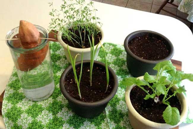 बचे बीजों से उगाएं सब्जियां