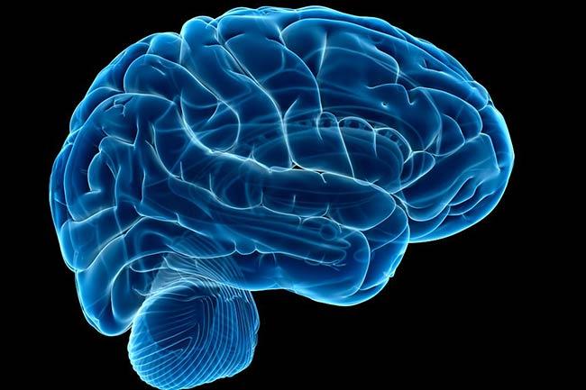 मस्तिष्क रोग और शरीर की जलन के लिए उपयोगी