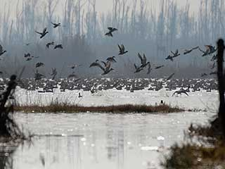 Avian Influenza outbreak: Know about this deadly bird flu