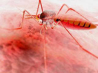 मलेरिया मुक्त हुआ श्रीलंका, भारत में कब होगा खत्म?