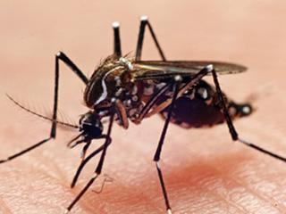 प्रेग्नेंसी में डेंगू और चिकनगुनिया से ऐसे करें बचाव