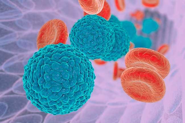 श्वेत रक्त कोशिकाओं पर आक्रमण