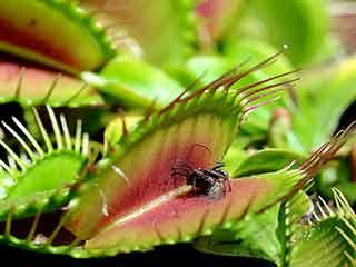 इन पौधों को घर में लगाएं, मच्छर क्या उनका बाप भी नहीं आएगा!