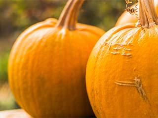 Here is why you should add pumpkin to your diet