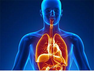 मानव शरीर में एक नए अंग 'मेसेंट्री' की खोज