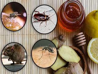 ये घरेलू उपाय अपनाएं, मक्खी, मच्छर और चूहे को दूर भगाएं!