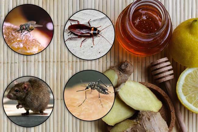 घरेलू उपायों से भगाएं मक्खी, मच्छर....