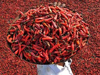 Eat red chilies for a longer and healthy life