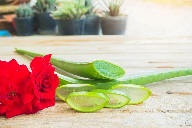 Aloe Vera and rose water
