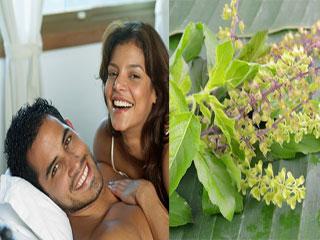 तुलसी के बीजों से करें अपनी सभी सेक्स समस्याओं का इलाज
