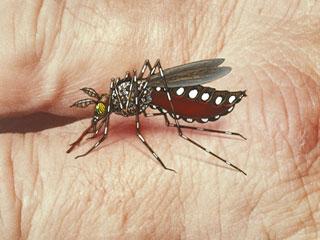 भारत में डेंगू को ट्रैक करने के लिए बना मोबाइल ऐप