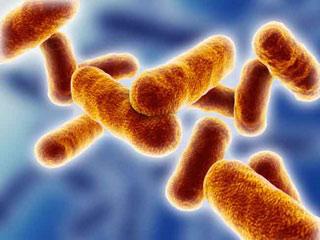 खाने की इन चीजों में सबसे जल्दी पनपता है बैक्टीरिया
