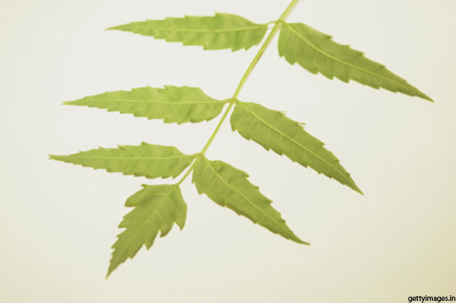 Neem for fungal infection