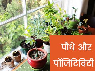 पौधे और पॉजिटिविटी