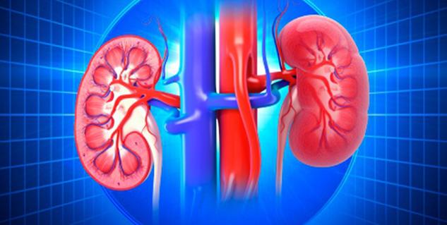 kidney in hindi