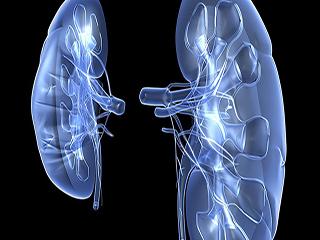 किडनी को भी प्रभावित कर रहा है बढ़ता प्रदूषण, अपनाएं ये उपचार