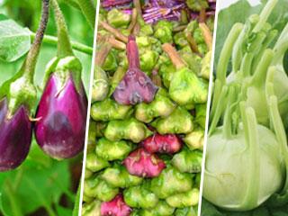 सर्दियों में खाएं सिर्फ ये 3 सब्जियां, हमेशा रहेंगे स्वस्थ