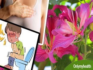 स्तनों की गांठ व बवासीर को जड़ से खत्म करता है ये 1 फूल
