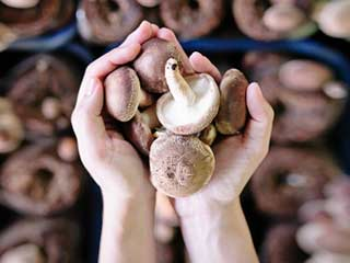 Magic mushroom's compound may treat depression