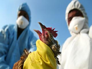 इंसानों में भी फैल सकता है पक्षियों का ये जानलेवा रोग, पहचानें लक्षण