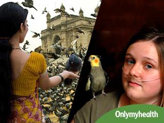 दूर से ही दें कबूतर को दाना, नहीं तो हो जाएगी 'बर्ड फैंसियर्स लंग' बीमारी