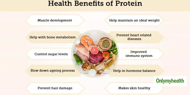 protein_importance_to_body
