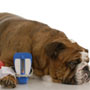 How to detect Diabetes in Pets?