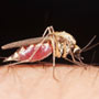 Dengue Attacks begin in New Delhi