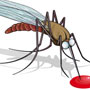 How Chikungunya is transmitted?