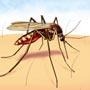 मलेरिया के कारणों को पहचानकर बच सकते हैं इस खतरनाक बीमारी से