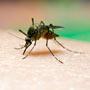 डेंगू जानलेवा भी हो सकता है