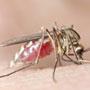 भारत में डेंगू पर शोध
