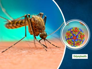 Tips To Keep Yourself Safe From Chikungunya