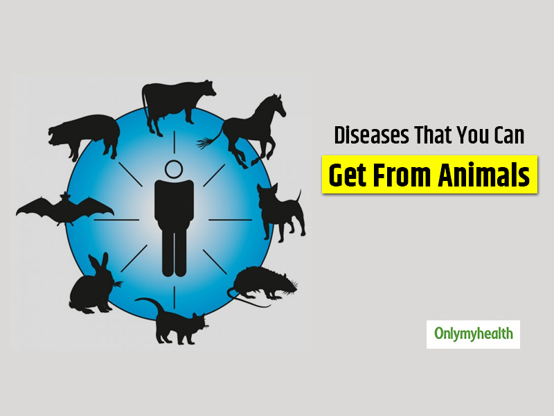Be Careful! Your Pet Might Make You Sick. Know How Zoonotic Diseases Spread And Its Prevention