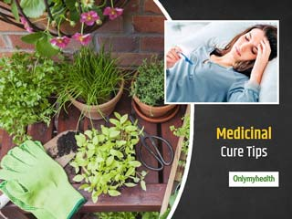 These 3 Plants At Home Can Help Keep Monsoon-Related Diseases Like Typhoid At Bay