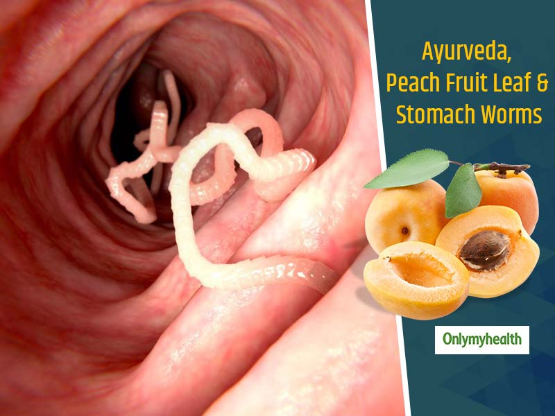 Peach Fruit Leaf For Stomach Worms: Know How To Treat Intestinal Worms As Told by Baba Ramdev
