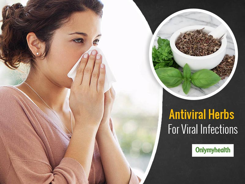 Viral Infections Cure: Fight Viral Infections With These 7 Antiviral Herbs
