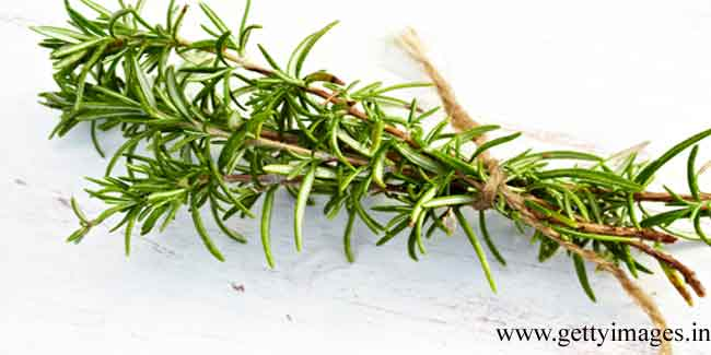 Rosemary Oil as a Remedy for Hair Loss
